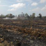 4 Hektar Kebun Tebuh dilalap Sijago Merah