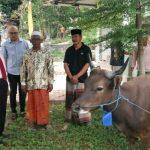 Ketua DPRD Kepri Jumaga Nadeak Serahkan Hewan Qurban Ke Pengurus Masjid