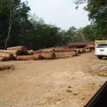 Pembalakan Hutan Meresahkan, Masyarakat Sumay Minta Dirjen Kehutanan Turun Tangan