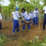 Lanal Dabo Singkep Gelar Panen Kebun Ketahanan Pangan