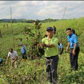 BP Batam dan Pemkot Batam Berkolaborasi Lakukan Pembersihan Eceng Gondok di Waduk Duriangkang