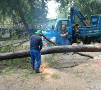Tim Pruning Penghijauan BP Batam Siaga Tangani Pohon  Tumbang