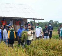 Bupati Wello Puji Hasil Panen Padi di Desa Panggak Darat 'Hasil Memuaskan'