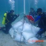 75 Orang Penyelam Kepri Kibarkan Bendera Merah Putih Dibawah Laut